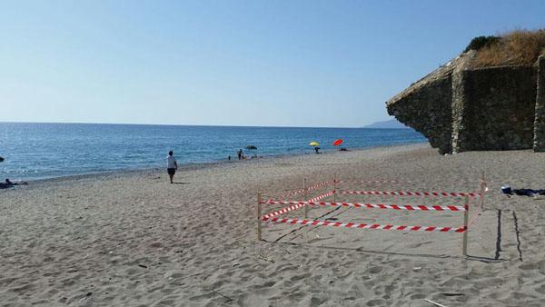 L'esemplare di Caretta caretta ha nidificato nella spiaggia di località Ponticello di Fuscaldo
