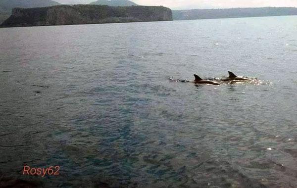 I delfini avvistati domenica nuotano vicino all'Isola di Dino