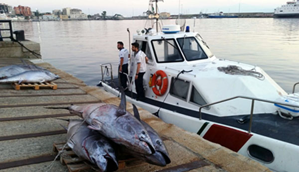 tonni rossi sequestrati cetraro