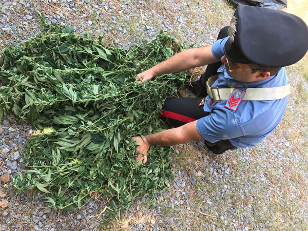 bonifati marijuana sequestro