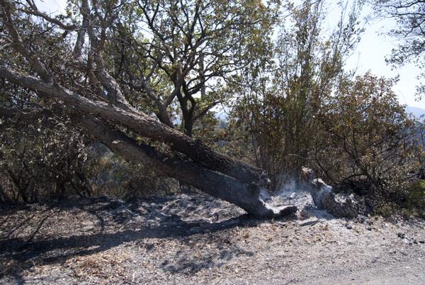 incendi santa domenica talao calamità