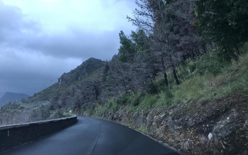 maratea-pineta-alberi-pericolanti-1