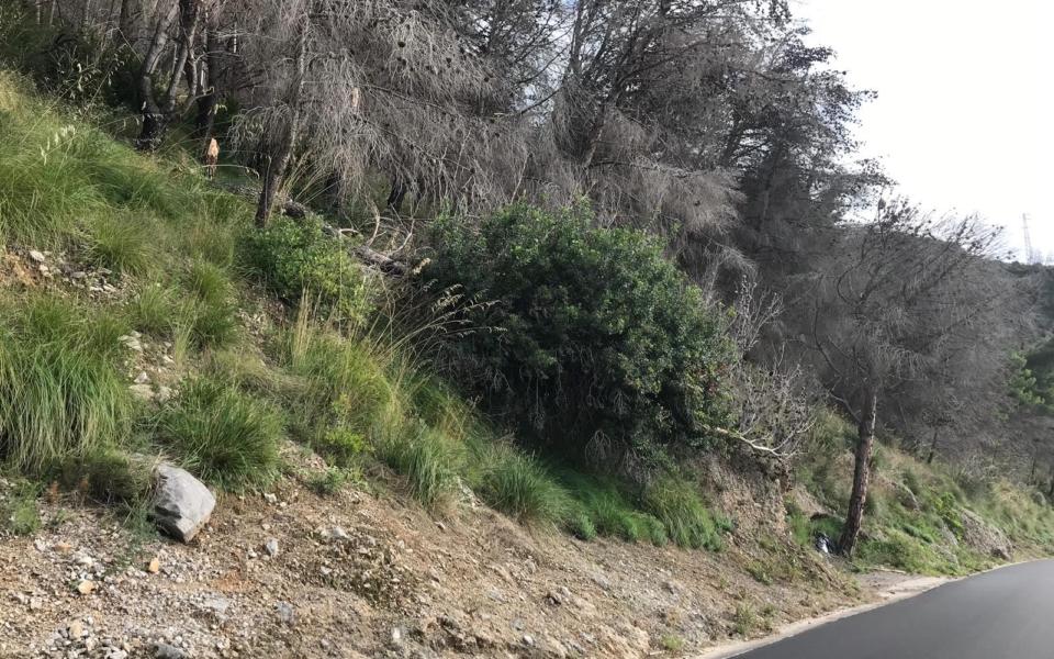 maratea-pineta-alberi-pericolanti-3