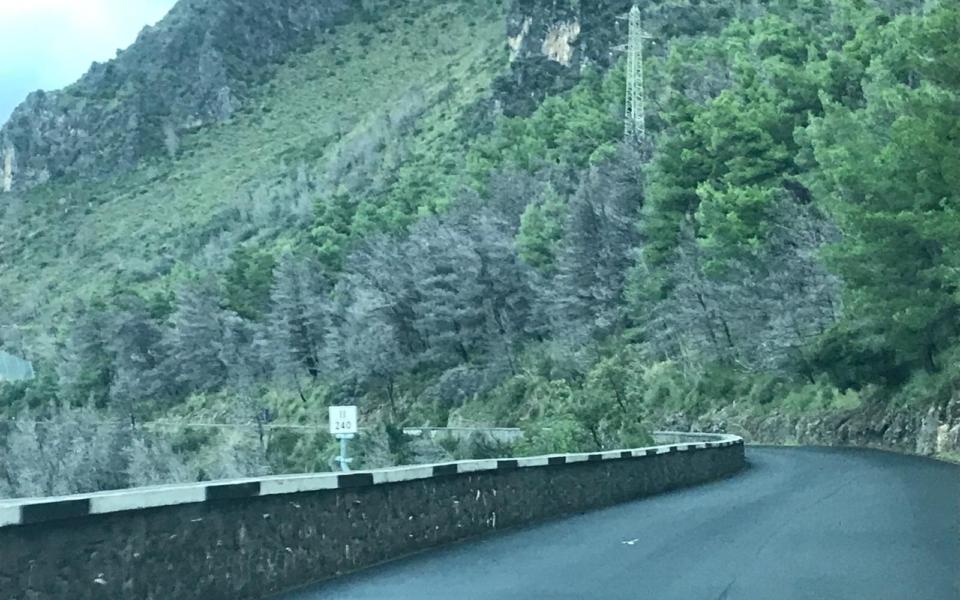 maratea-pineta-alberi-pericolanti-4