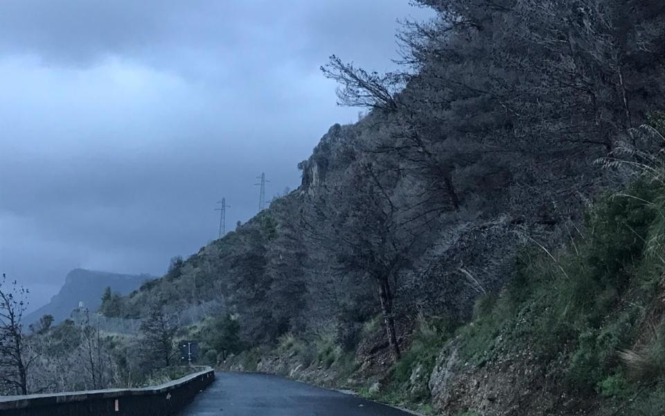 maratea-pineta-alberi-pericolanti-5