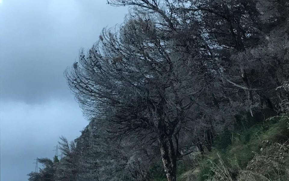 maratea-pineta-alberi-pericolanti-7