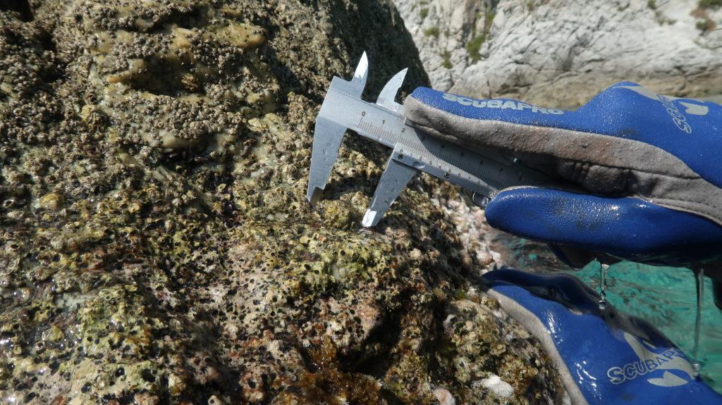 patella ferruginea calabria mare alto tirreno cosentino