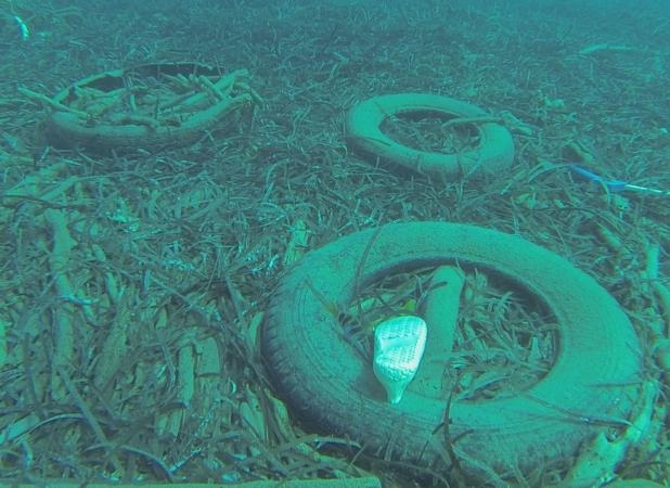 isola dino fondali pulizia sub copertoni