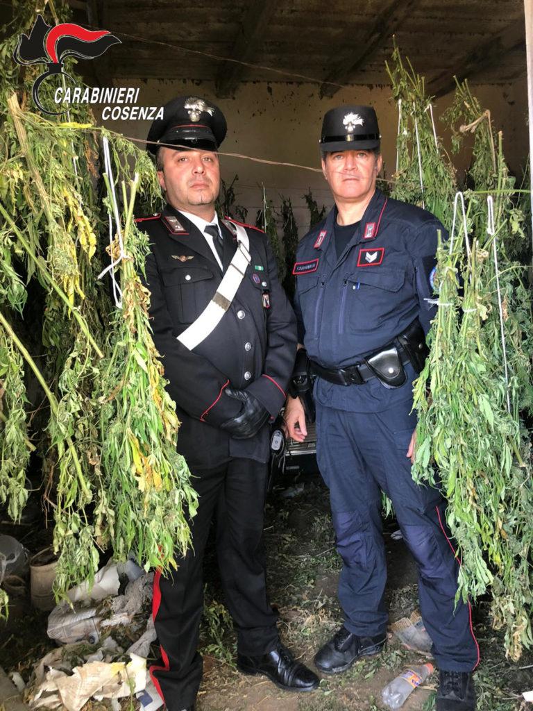 bonifati marijuana sequestro carabinieri arrestati padre e figli