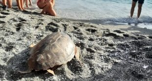 cetraro Tartaruga Mariachiara