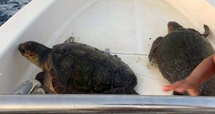 tartarughe maratea salvate agosto 2021