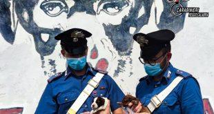 cuccioli cane abbandonati brancaleone carabinieri