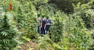 fuscaldo marijuana polizia